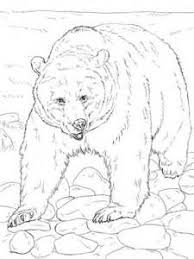 Animal Patterns To Trace Grizzly Bear Free Drawing Patterns To Trace Coloring Pages