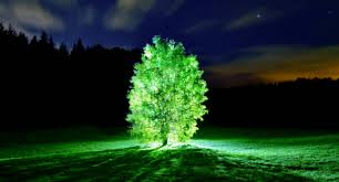 Glow In The Dark Trees To Replace Street Lights Mit Created Living Plants That Glow Like A Lamp And Could