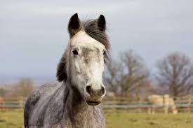 Malignant Melanomas In Horses What Do They Mean The Horse