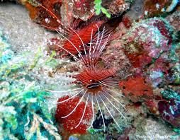 Due tesisti alle maldive a studiare i coralli danireef portale