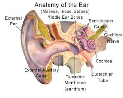 Ear Thermometer Fever Chart How To Take An Ear Temperature What You Need To Know