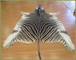 real zebra skin rug home design ideas for inspirations 8