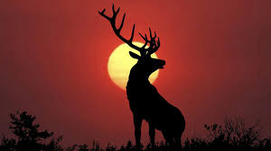 wallpapers for deer wallpaper