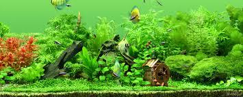 Freshwater Aquarium Desktop Background ...
