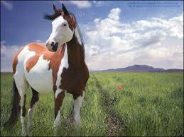 paint horses running in a field.  Paint Paint Horses Running In A Field  Photo24 Throughout Horses Running In A Field E