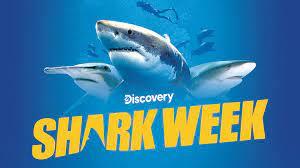 Watch Shark Week 2021 D+ Trailer ...