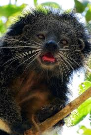 Small Picture 15 best Bearcats images on Pinterest Animals Exotic animals and