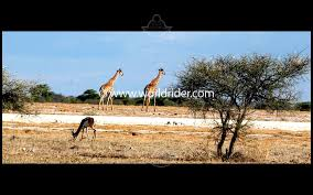 etosha national park a wildlife photo essay etosha national park a wildlife photo essay