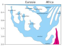 Human Taxonomy Wikipedia