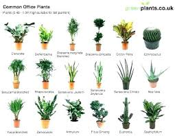 office cubicle plants. Small Desk Plants Office Cubicle Plant For Friendly Table Top R