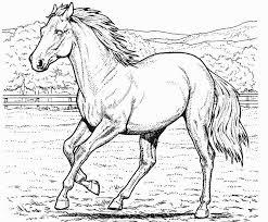 Small Picture Printable horse coloring page Coloringpagebookcom