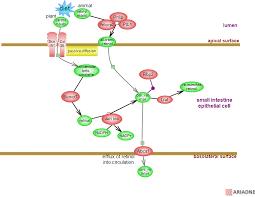 retinol metabolic pathwayrat genome databasepathway diagram