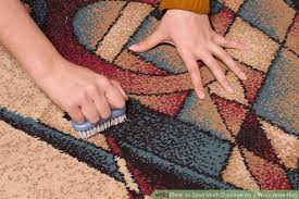 image titled spot moth damage on a wool area rug step 1