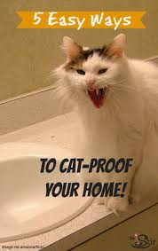 how to cat proof your house
