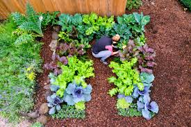 Try Growing These Easy Tasty And Nutritious Winter