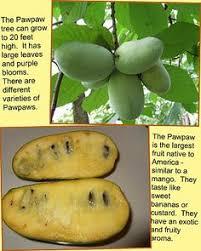 Michigan Apples  MichiganFruit Trees In Michigan