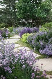 landscaping shrubs