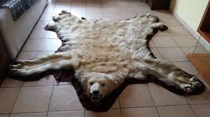 top taxidermy polar bear skin with nicely mounted head ursus maritimus 200