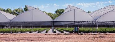 the most cost effective greenhouse in our range