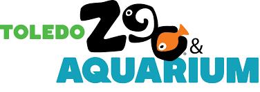 kelsey ketcham design category brand storytelling tzandaq logo color