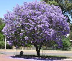 Download Best Tree For Backyard  Solidaria GardenGood Trees For Backyard