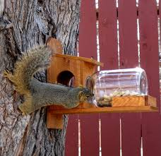 fox squirrel house plans best of squirrel feeder plans lovely how to make a squirrel feeder