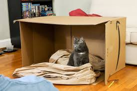 a cat sitting in a large cardboard box surrounded by paper