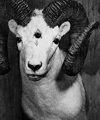 Chifres Evil Devil Lucifer Macabre Darkness Jofrei Luz Creepy Baphomet Satanic Bode Demon • Horns Eye Occult Goat Occultism