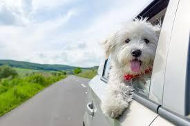 Why do we <b>love pets</b>? An expert explains. - The Washington Post
