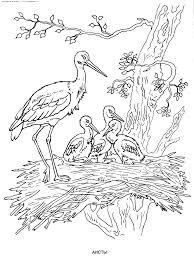 119 Dessins De Coloriage Oiseau Imprimer Sur Laguerche Com Page 4