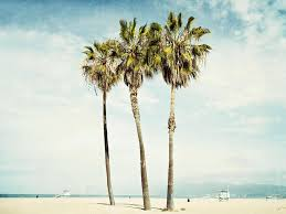 palm trees tumblr vertical. California Photograph - Venice Palms By Bree Madden Palm Trees Tumblr Vertical I