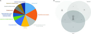 Cbt Pie Chart A Pie Chart Showing Frequency Of David Terms Input Data