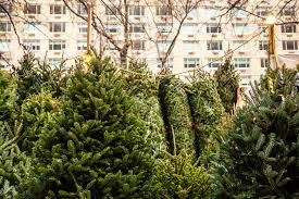 Where To Buy A Christmas Tree In VancouverWhen Should You Buy A Christmas Tree