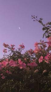 Aesthetic Flower And Sky Wallpapers ...
