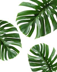 Tropical Leaf Printable Art Monstera leaves Tropical by PaperStormPrints