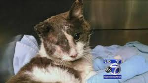 animal abuse cats. Simple Cats Elementary School Students Charged With Animal Abuse In Death Of Cat   Abc7nycom Throughout Animal Abuse Cats S
