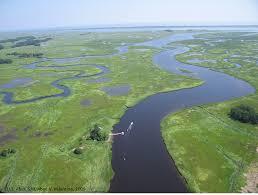 Welcome To Plum Island Ecosystems Lter Plum Island Ecosystems