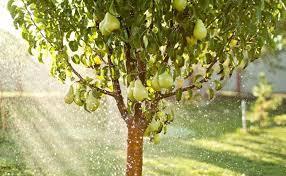Josh BlakesleyTree Bearing Fruit