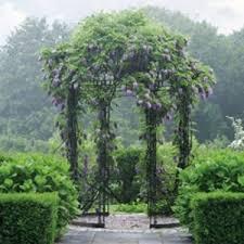 wisteria arbor at applewood