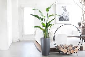 Plant Interior Design Interesting Inspiration