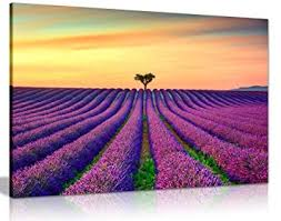 purple lavender field with orange sunset canvas wall art picture print 36x24in  on lavender sunset wall art with amazon purple lavender field with orange sunset canvas wall art