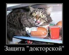 ah ma gaaad it s your birthday cats cat Картинки по запросу поздравление с защитой докторской диссертации