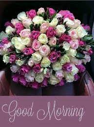 25+ Good Morning Images with Flowers HD ...