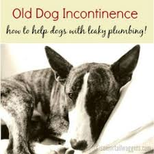 dog incontinence bed.  Incontinence Senior Bull Terrier Resting Intended Dog Incontinence Bed D