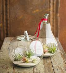 view in gallery fruit shaped air plant terrariums