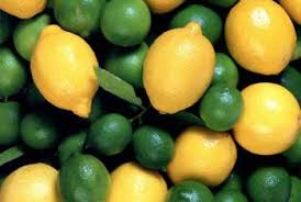 How To Grow Lemon Trees In Hydroponics Home Guides Sf Gate