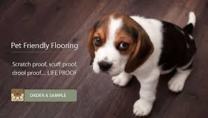 pet friendly flooring scratch proof scuff proof drool proof life proof flooring