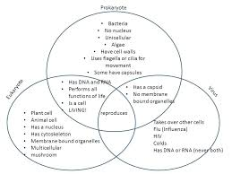 Venn Diagram Copy Prokaryotes And Eukaryotes Venn Diagram Michaelhannan Co