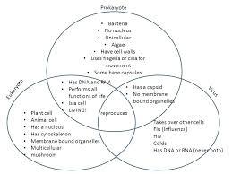 Venn Diagram Copy Prokaryotes And Eukaryotes Venn Diagram Michaelhannan Co