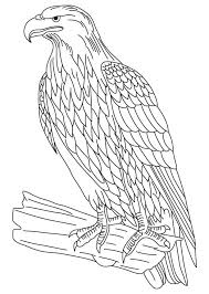 Bald Eagle Coloring Pages For Kids Printable 360coloringpages